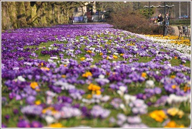 Wiosno, gdzie jesteś?