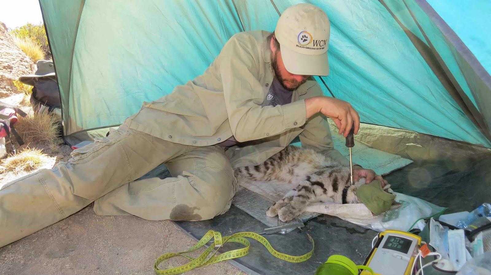 El blog de Alianza Gato Andino (AGA): Noticias desde el campo, Loma ...