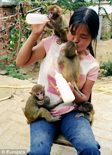 Chinese woman breastfeeds monkeys