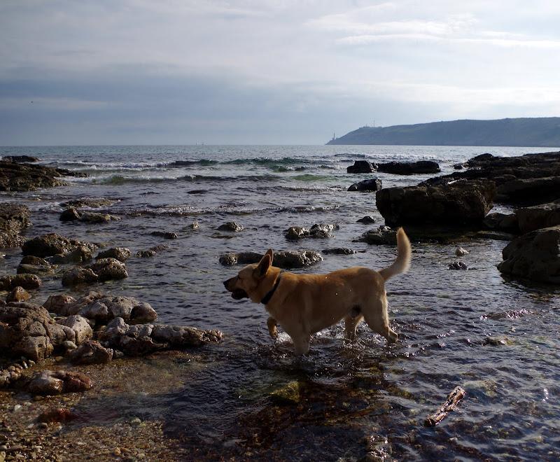 Apulien mit Hund