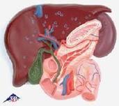 kenali gejala sakit kencing manis
