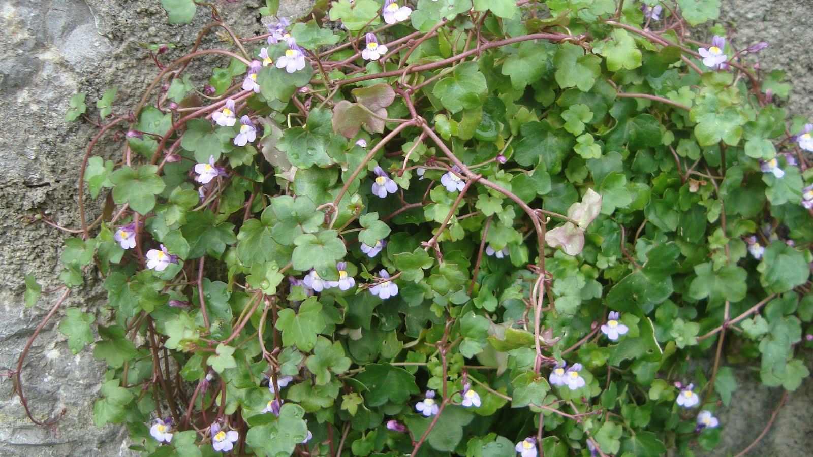 Floresamatxo todo sobre las flores consejos para cuidar - Cuidados de una hortensia ...