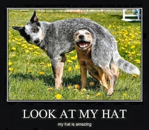 dog wears funny amazing hat photo image