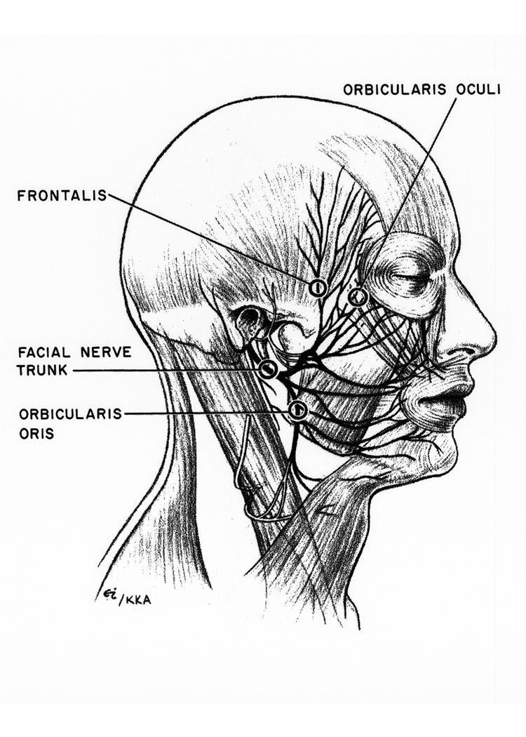 facial nerve ppt