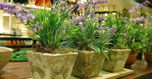Inicie su negocio en casa vendiendo plantas artificiales for Casa cristina plantas artificiales