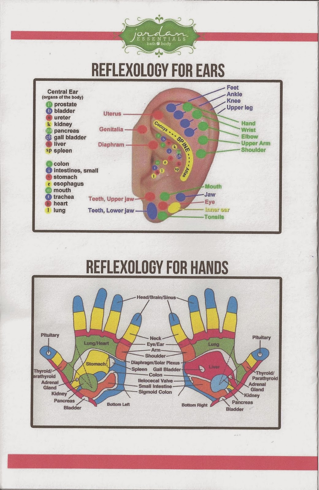Face Reflexology Acne Reflexology