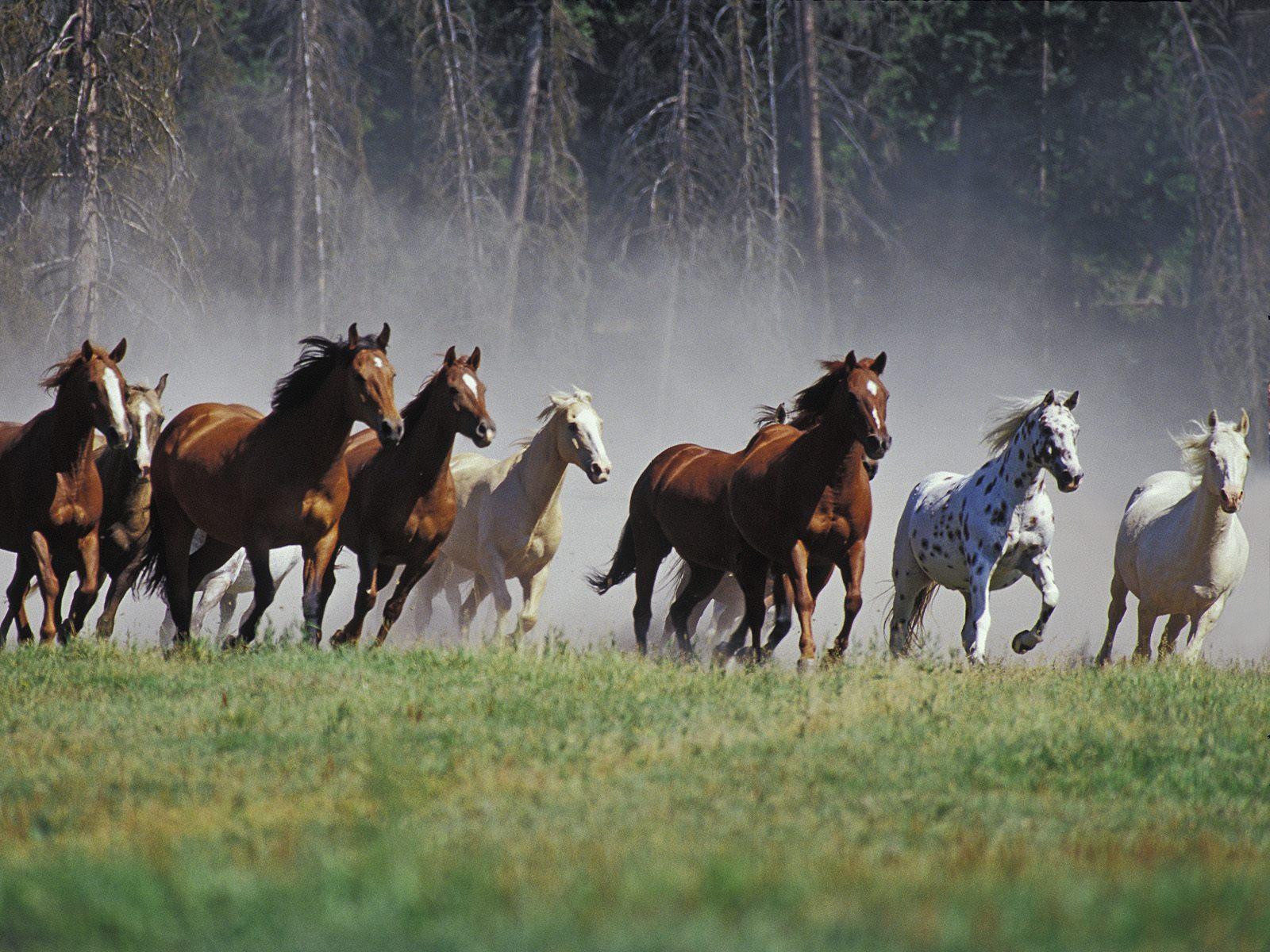 Los mejores fondos de caballos