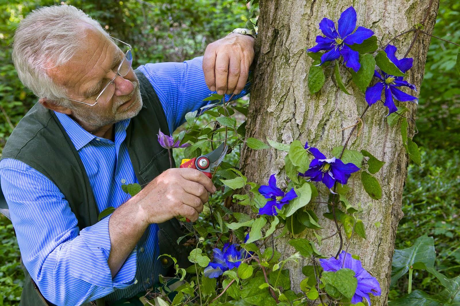 Formazione e lavoro corsi online di giardinaggio con il for Giardiniere bologna