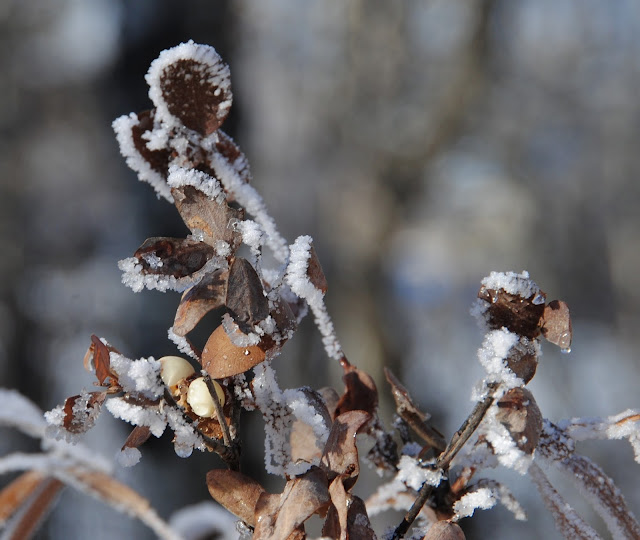 Photo Friday - Ruth Daly - midwinter days - Pierced Wonderings