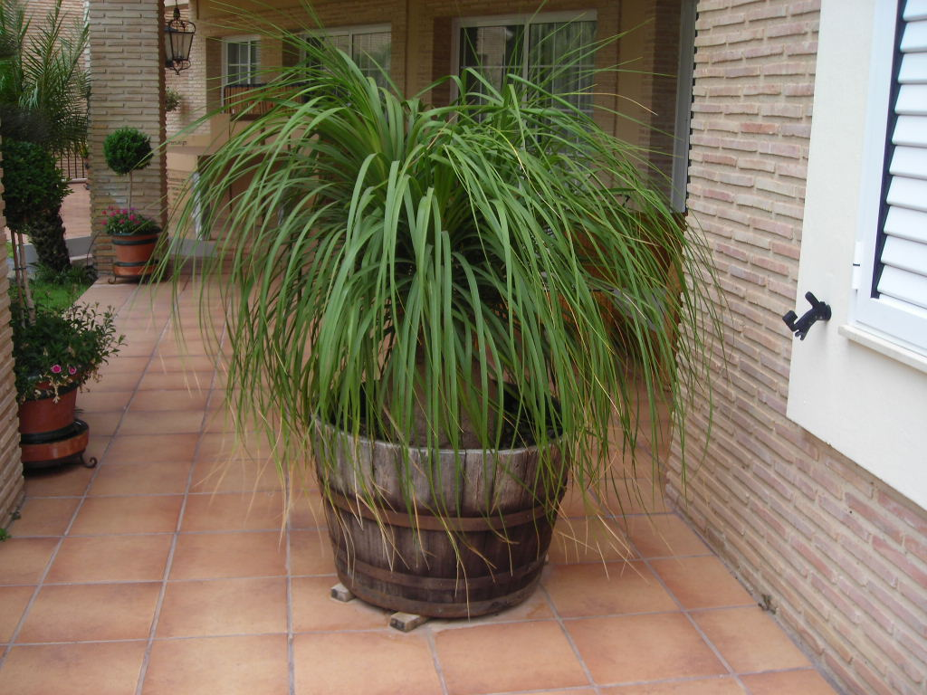 Crea tu jard n las plantas en la terraza cuidados b sicos ii for Plantas para estanque exterior