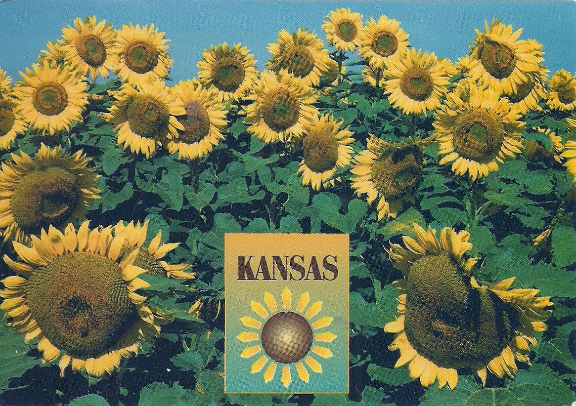 Projek Satu Dunia e World Project ™ U S A Kansas State Flower 2