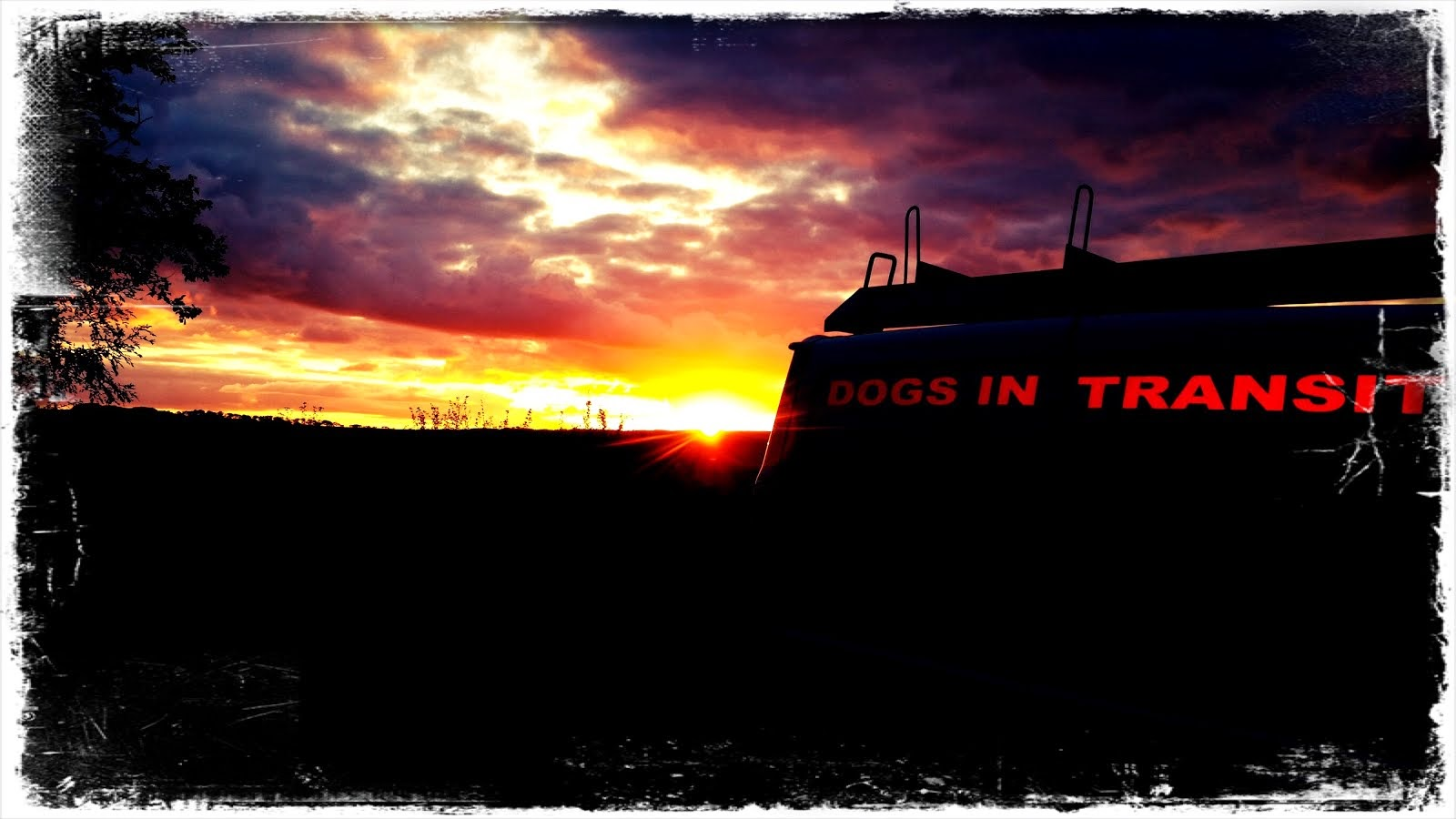 Dogs In Transit.....