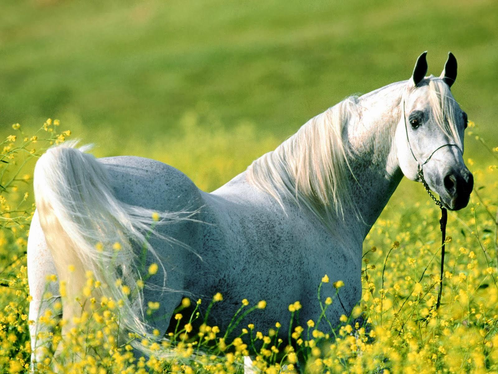 Cool   Wallpaper Horse Watercolor - the-best-top-desktop-horse-wallpapers-32  HD_85837.jpg