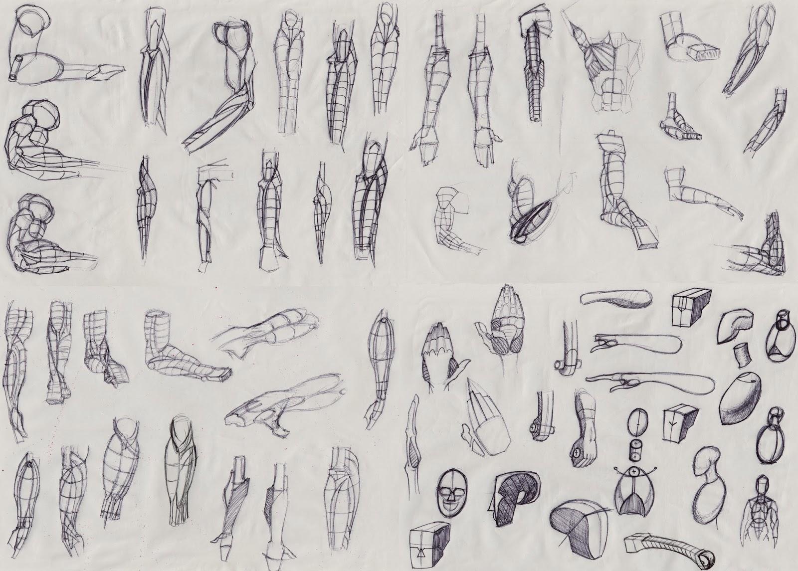 Carl Saunders Art Anatomy For The Artist