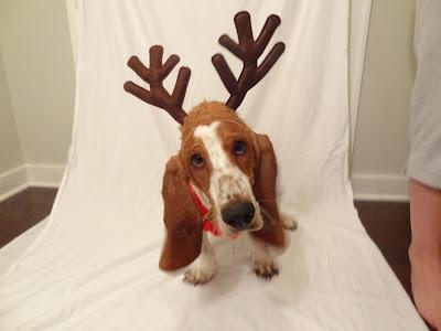 basset hound reindeer antlers