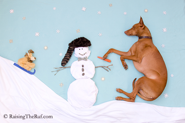 dog building snowman adventures while sleeping