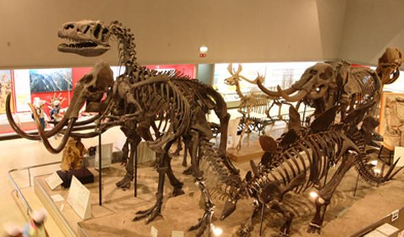 The Mongol Dinosaur Exhibition at Osaka Museum of Natural History