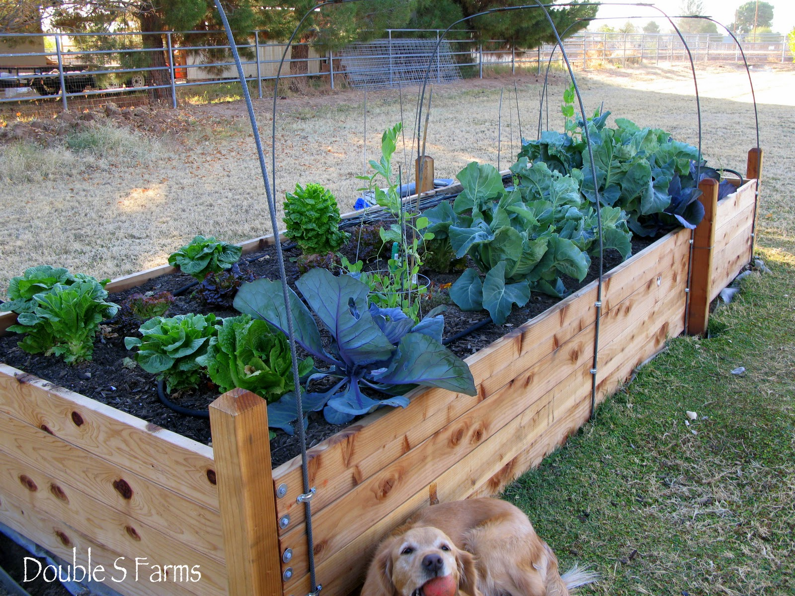 The perfect birthday gift a new vegetable garden for The perfect vegetable garden