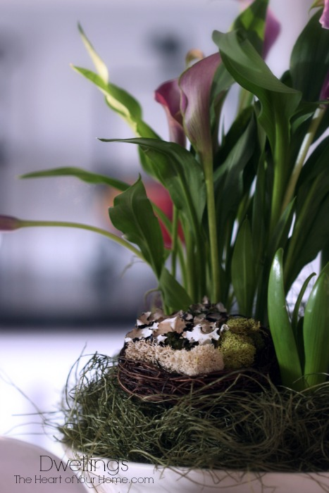 Lilies and Birds Nest