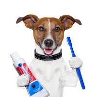 Chăm sóc răng miệng cho cún