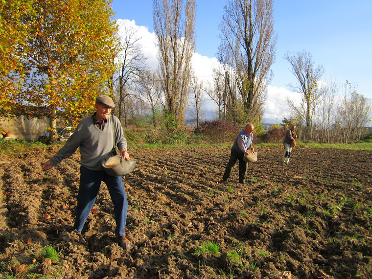 Sembradors de la Plana de Vic en el dia de la sembra del blat 2011