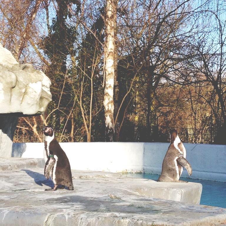Kölner Zoo, Köln, Zoo, Pinguine, Frollein Pfau