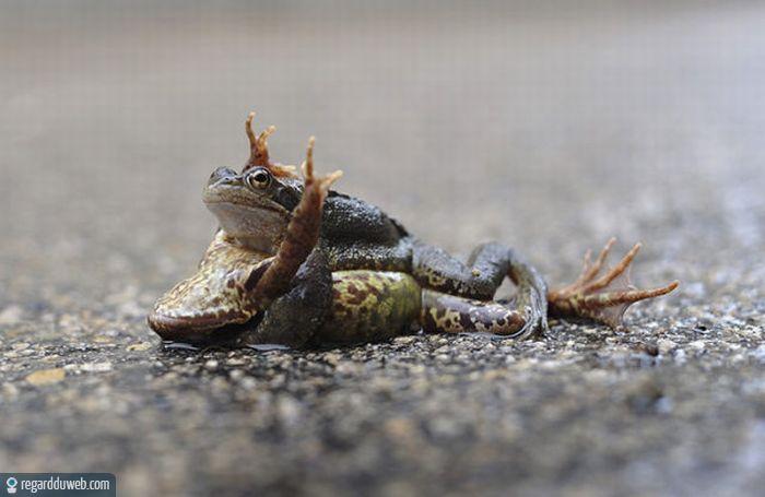 Images drôles et étonnantes Animal - Grenouille v152 - Des milliers de photos drôles et insolites
