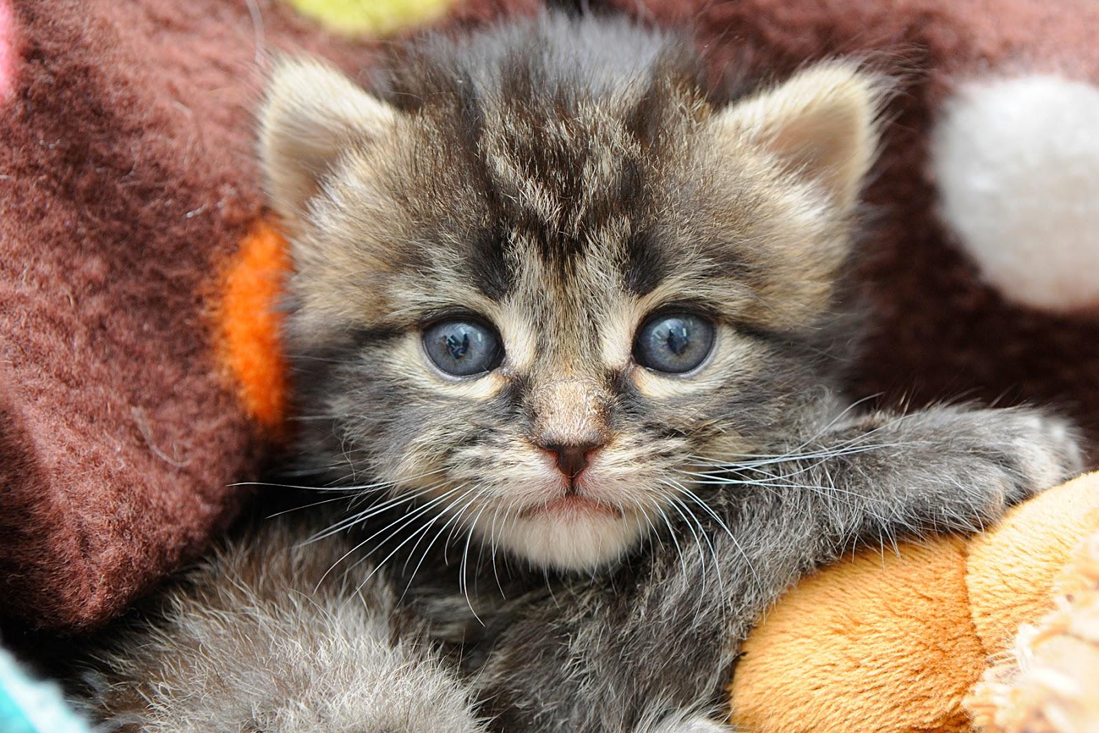 kitten cute closeup kitten face