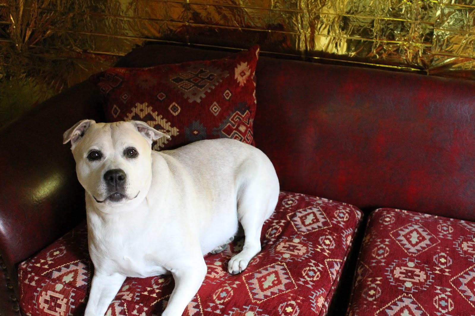 justine wynne gacy diy eine goldene wand f r die goldene ra. Black Bedroom Furniture Sets. Home Design Ideas