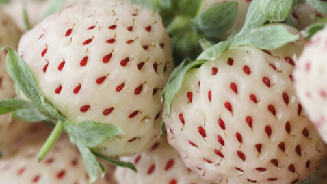 Fresas blancas Pineberry