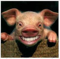 Fakta Ilmiah Tentang Keharaman Babi