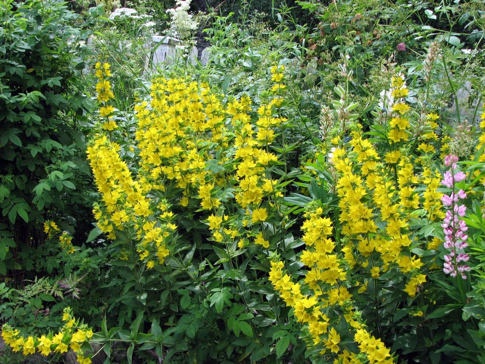 Trädgårdsprinsessans dagbok: gult och orange i rabatter och krukor!