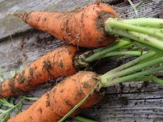 Сажать морковь во сне к чему 88