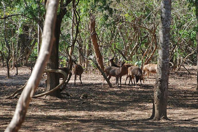 Manada de ciervos