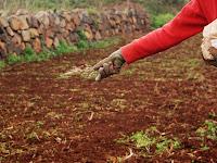 siembra y plantación 04_siembra+voleo