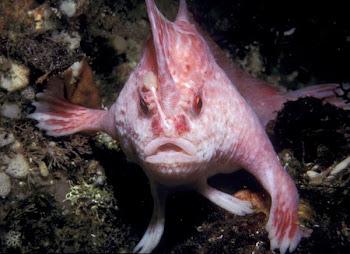 Okyanusta ilginç balık resimleri