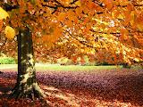 Estamos no Outono!