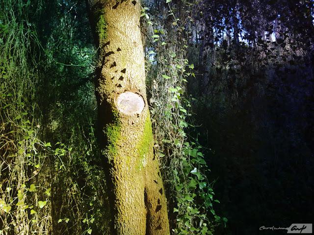 bosque-tronco-árbol
