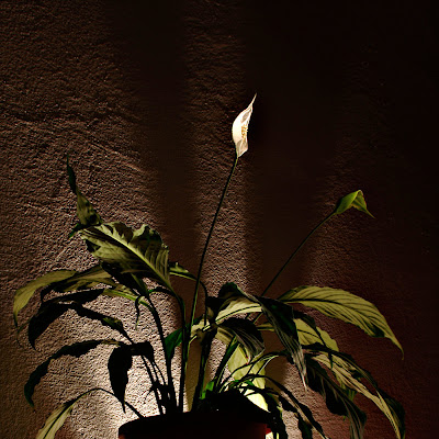 Lights&amp;Plants 1