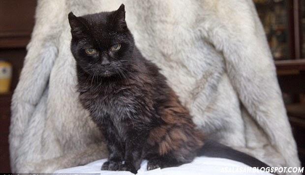 http://asalasah.blogspot.com/2014/05/ini-dia-si-poppy-kucing-tertua-di-dunia.html Tautan Permanen Otom