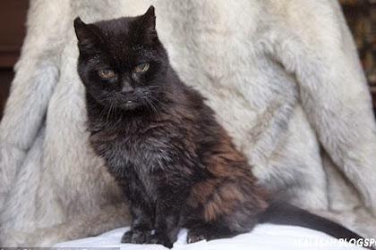 Ini Dia Si Poppy, Kucing Tertua di Dunia