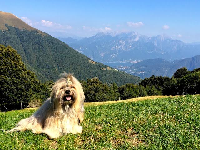 Rocco Havanese at Rifugio Boffalora near Pigra, Lake Como