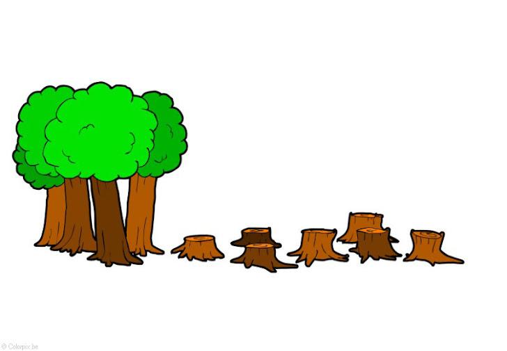 La Deforestacion: causas de la deforestación.