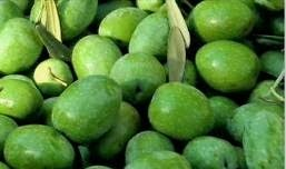 Sevillano olive variety is best known for its role in the bottom of a Martini glass