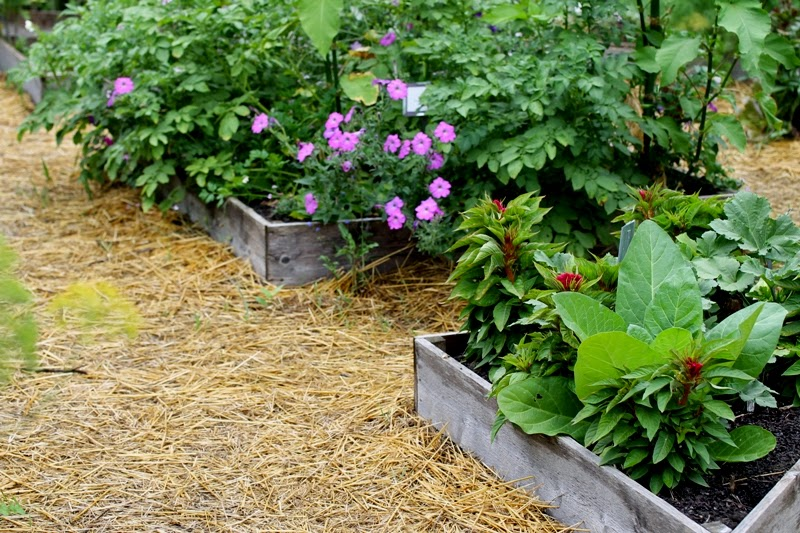 Raised beds in Diane's Garden, Seed Savers Exchange, Decorah, IA