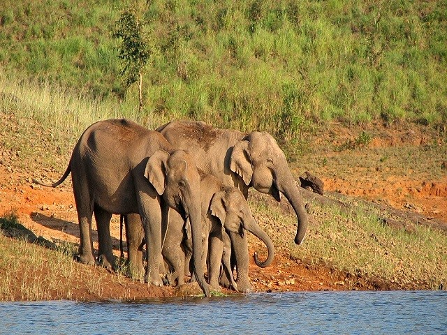 Periyar National Park – Wildlife Treasure of South India