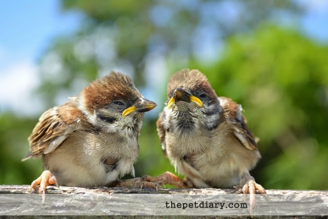 Maya Birds