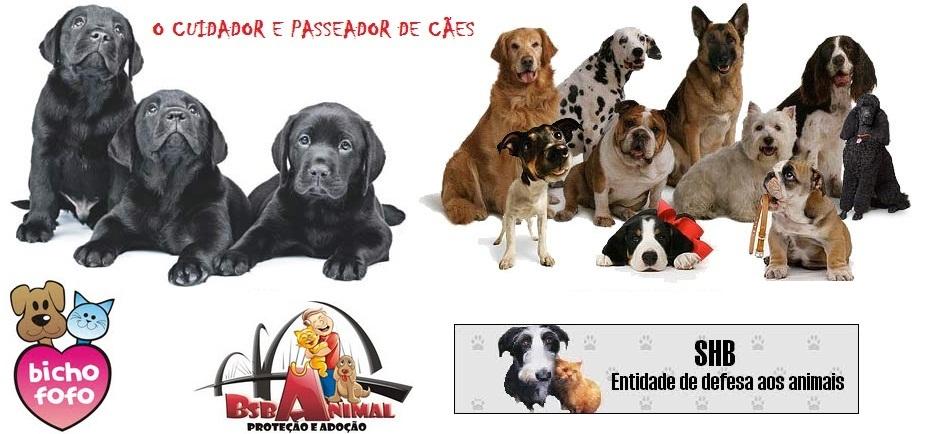 CUIDADOR E PASSEADOR DE CÃES