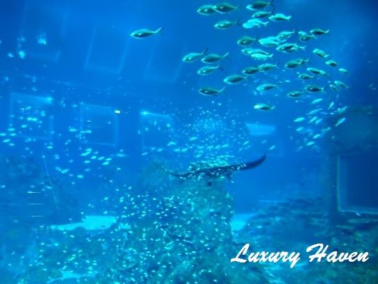 rws marine life park sting rays