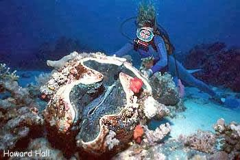 Conchas, uma das mais belas artes da natureza